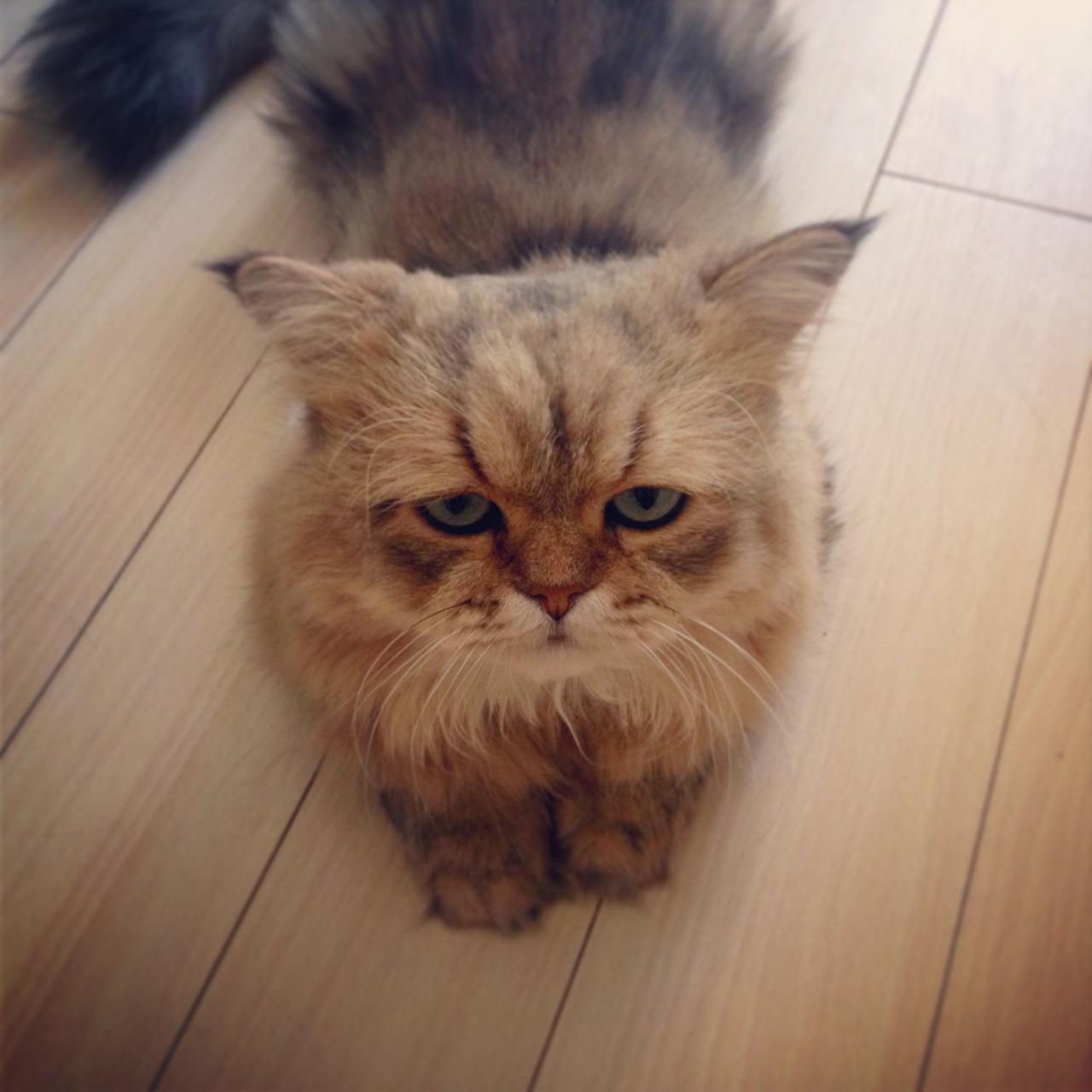 Разочарованный котик из Японии, Фу-Чан