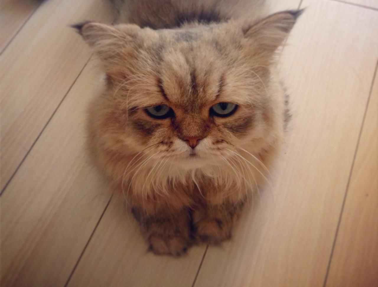 Новый кото-мем: Котик-Разочаровашка