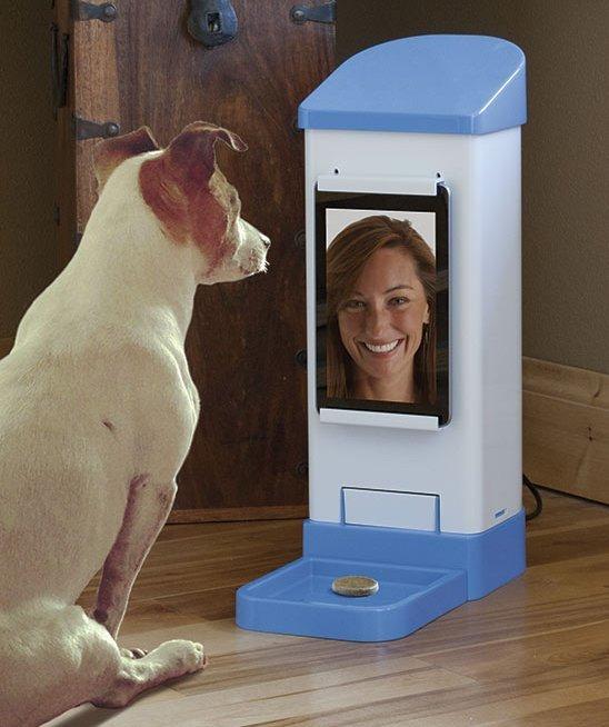 ICPooch, устройство для видео-общения с собакой