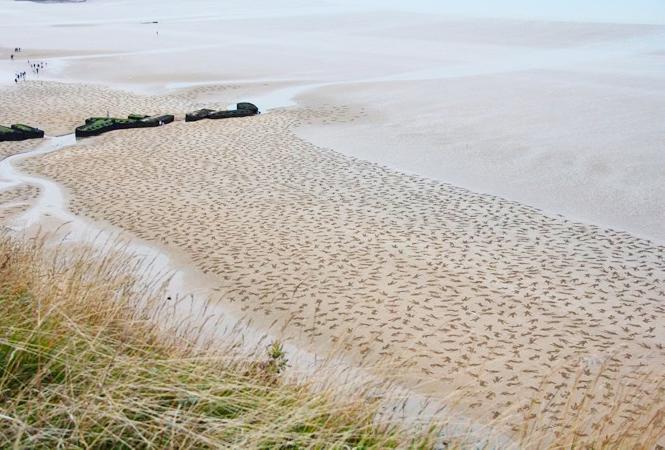 Высадка 9 000 песчаных солдат