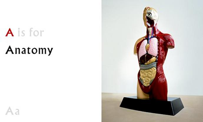 Дэмиен Хёрст, ABC, анатомия, азбука