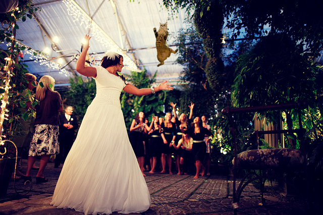 Котики, букет невесты, мем