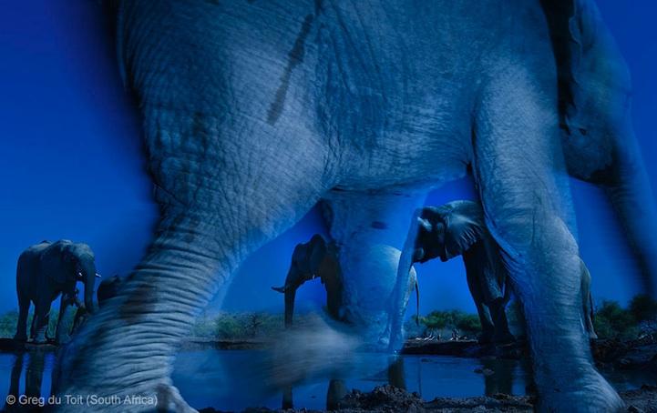 лучшее фото дикой природы, слон