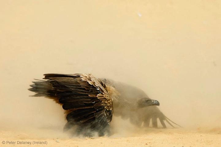 лучшее фото дикой природы, орел, птица