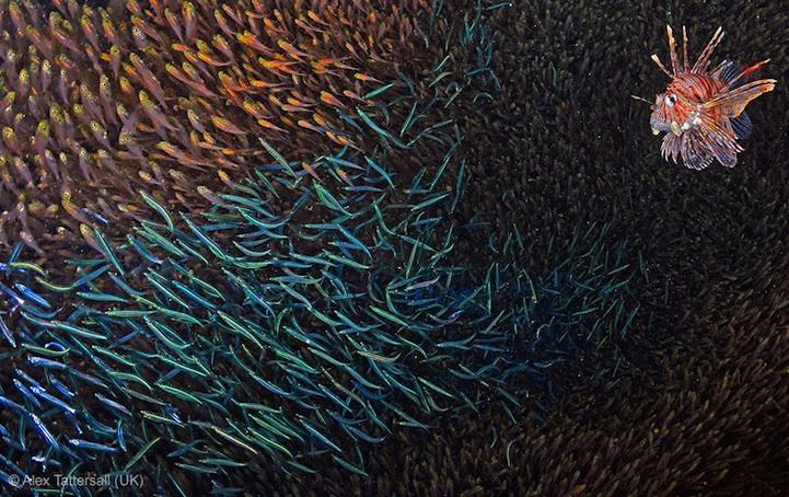 лучшее фото дикой природы, рыбы