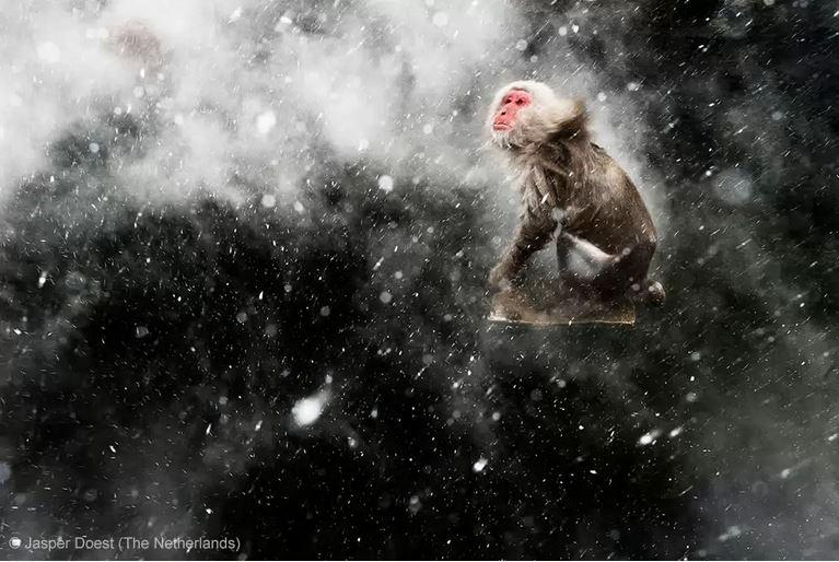Doest, лучшее фото дикой природы, обезьяна