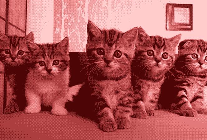 15 важных анимированных котиков
