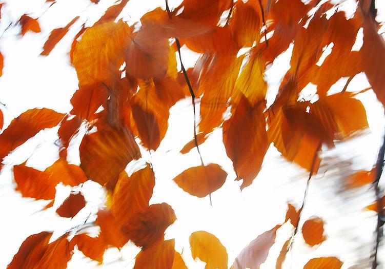 книги про осень