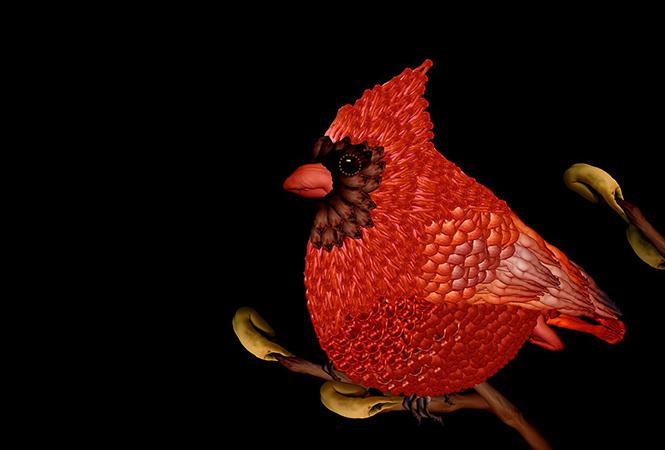 Птичка с человеческим лицом
