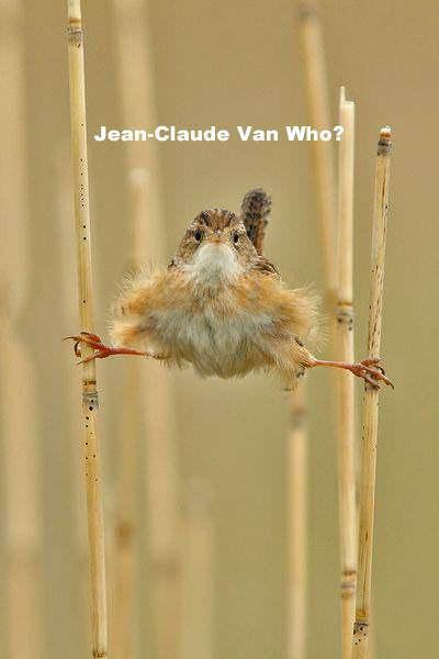 Жан-Клод Ван Кто?