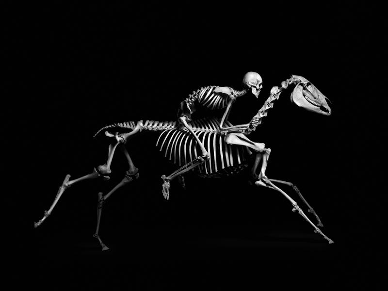 эволюция, скелет