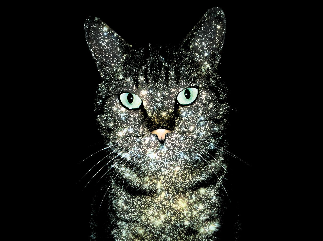 Космические коты: как совместить приятное с приятным