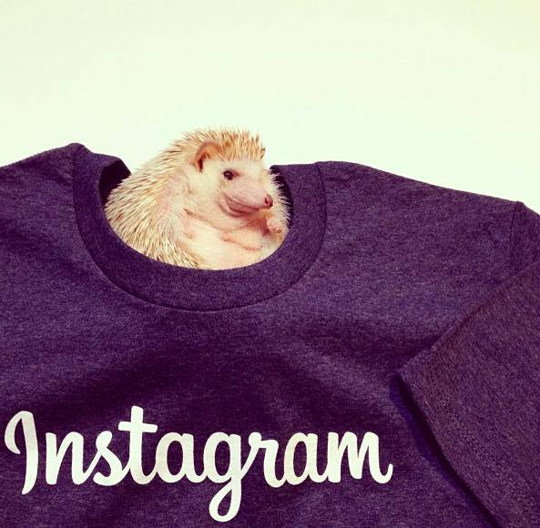 Eжик в Instagram