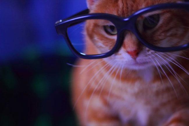 hipstercat3