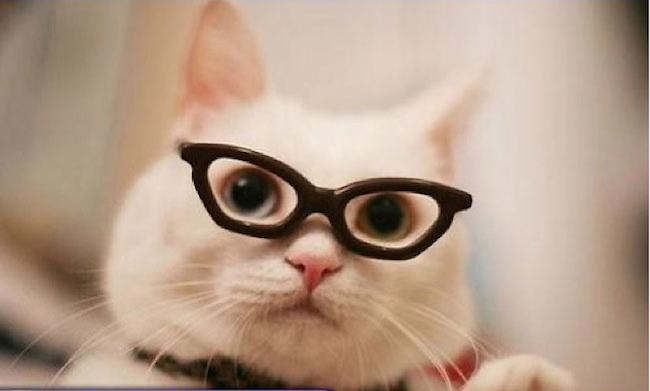 hipstercat6