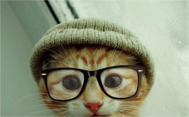 hipstercat2