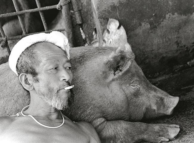 pigsandpapa052