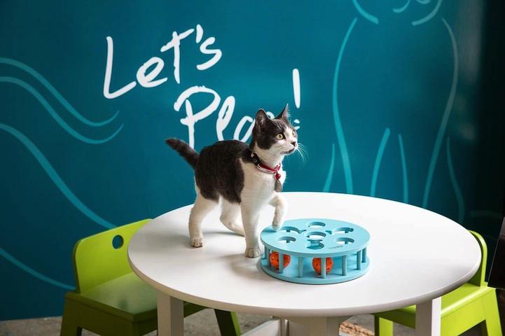 В Нью-Йорке открылось первое кошачье кафе