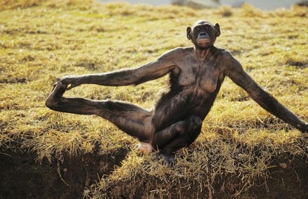funny-animals-doing-yoga-23