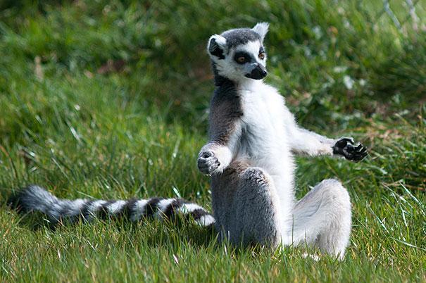 funny-animals-doing-yoga-32