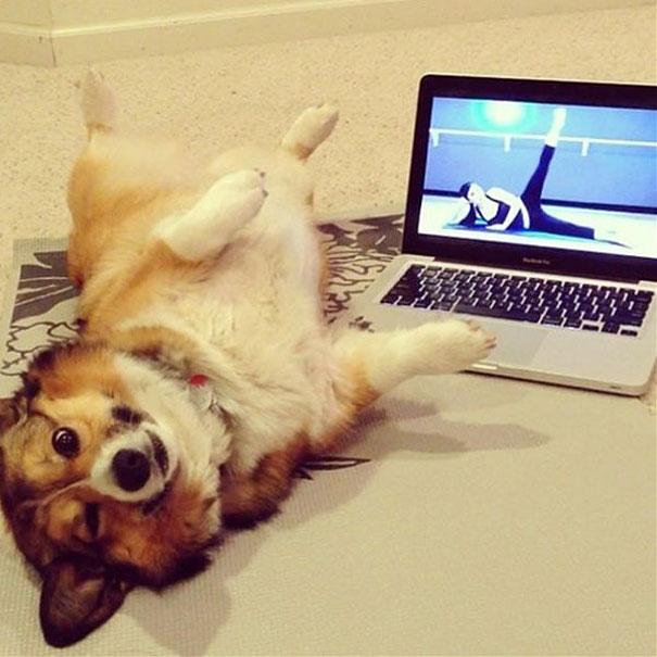 funny-animals-doing-yoga-1