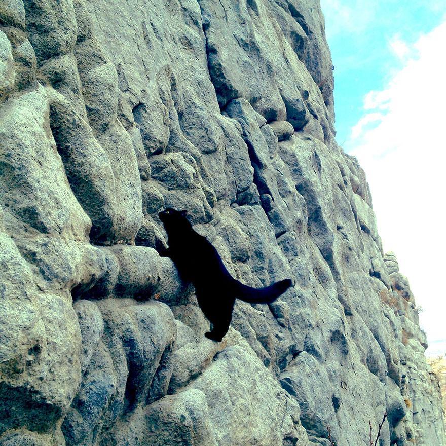 millie-climbing-cat-craig-armstrong-10