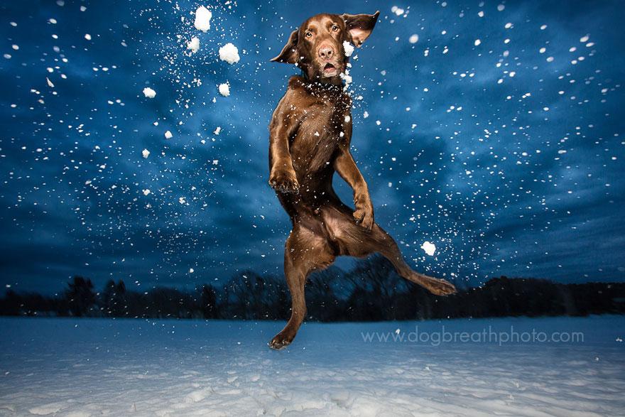dogs-dog-breath-photography-kaylee-greer-2