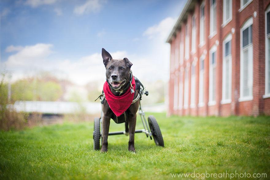 dogs-dog-breath-photography-kaylee-greer-9
