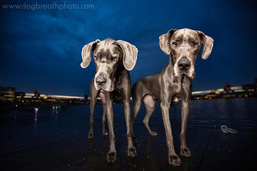 dogs-dog-breath-photography-kaylee-greer-10