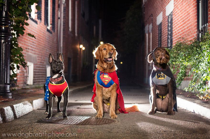 dogs-dog-breath-photography-kaylee-greer-16