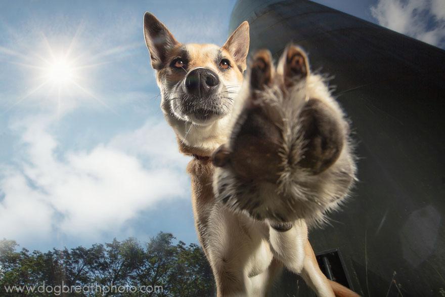 dogs-dog-breath-photography-kaylee-greer-17