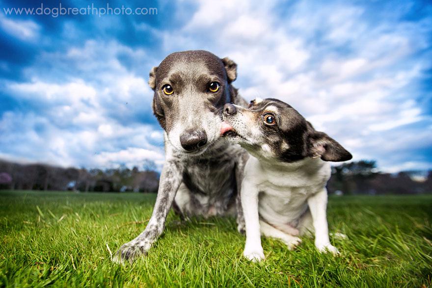 dogs-dog-breath-photography-kaylee-greer-22