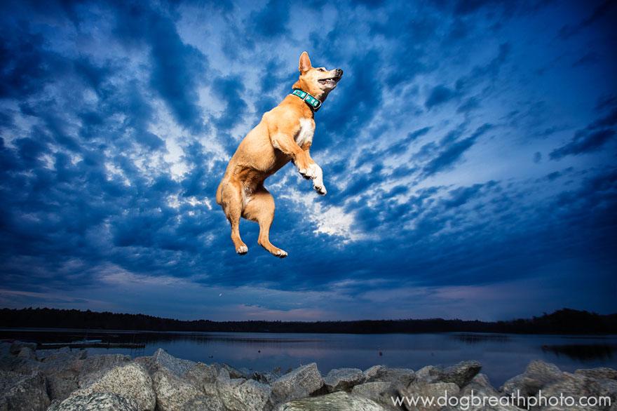 dogs-dog-breath-photography-kaylee-greer-25