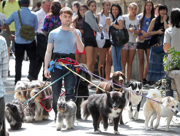 Дэниел Рэдклифф на прогулке со своими собаками