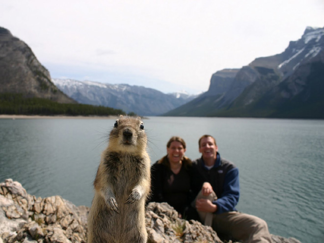 animal-photobomb7