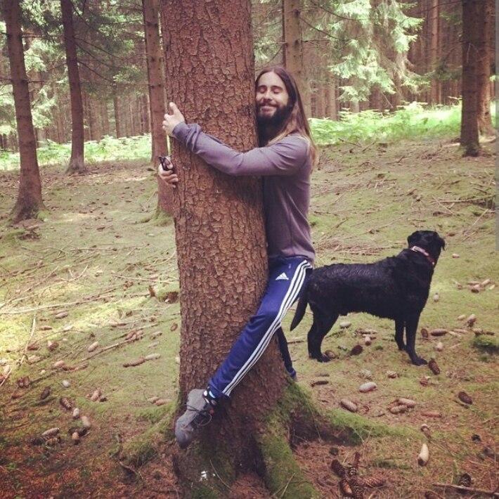 Джаред Лето и дерево - новый интернет мем