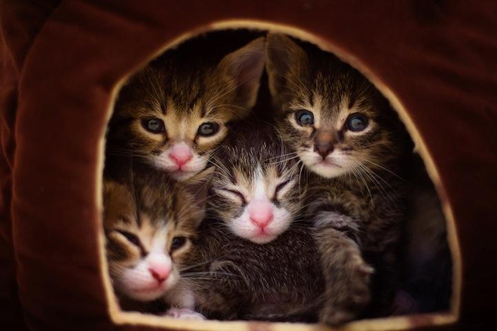 Как нужно фотографировать котиков