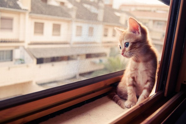cat-waiting-window-6