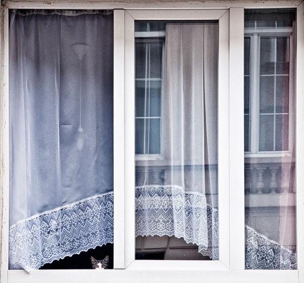 cat-waiting-window-40