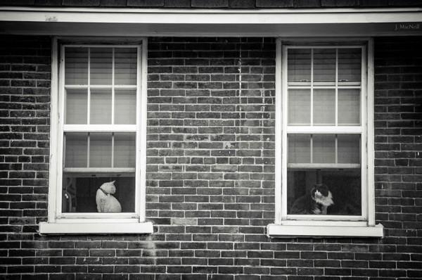 cat-waiting-window-48