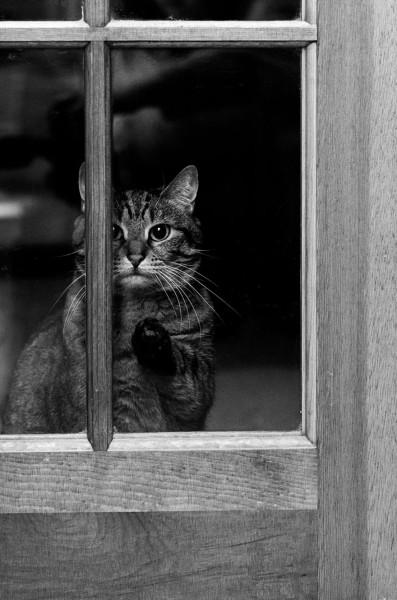 cat-waiting-window-62