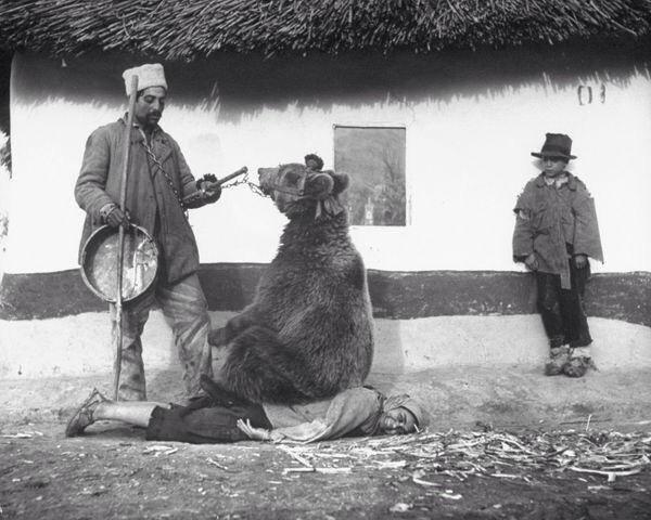 Лечение спины медведем