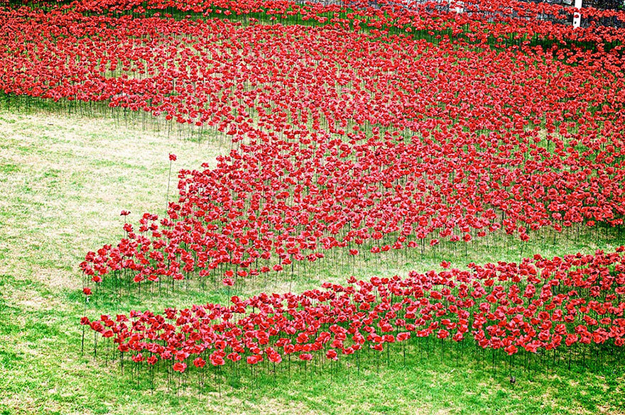 ceramic-poppies-first-world-war-installation-london-tower-5