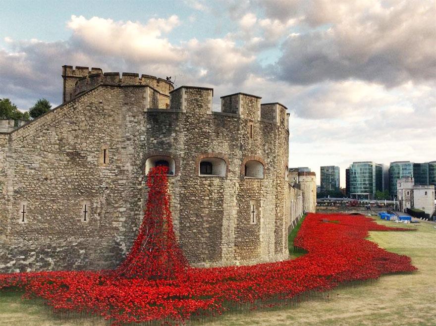 888 246 маков  в память о солдатах Первой мировой
