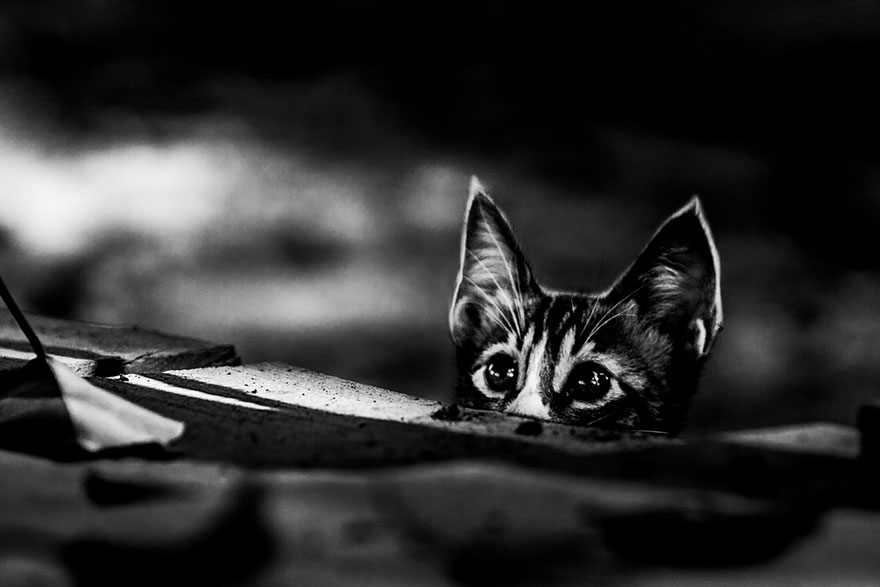 cat-black-and-white-photography-5
