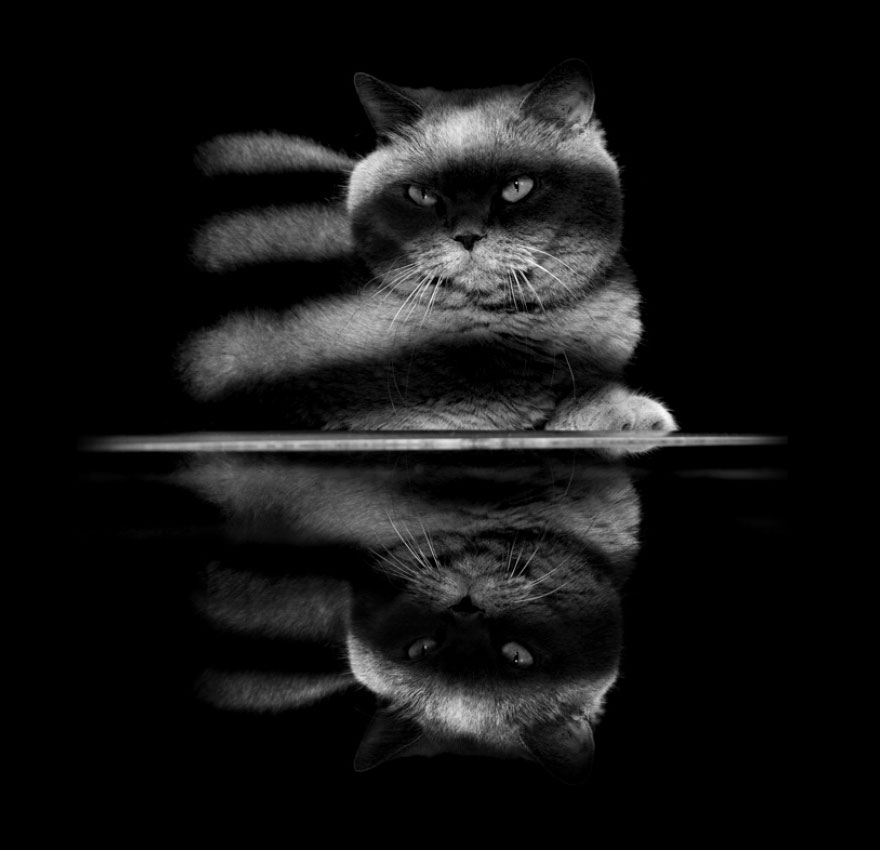 cat-black-and-white-photography-32