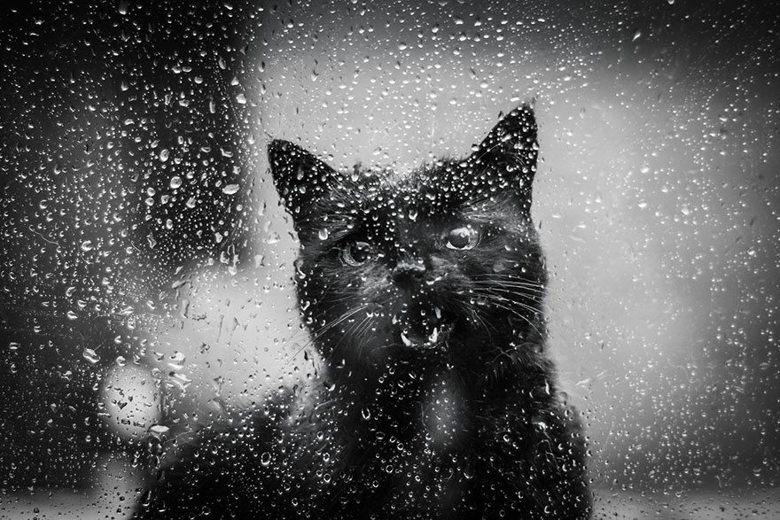 cat-black-and-white-photography-36