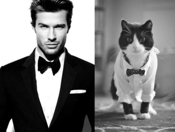 Кто лучше: мужчина или котик?