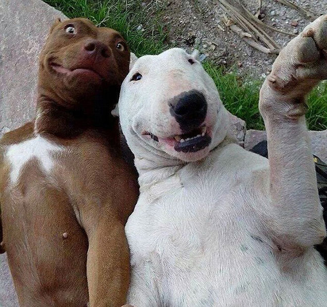 animal-selfies10