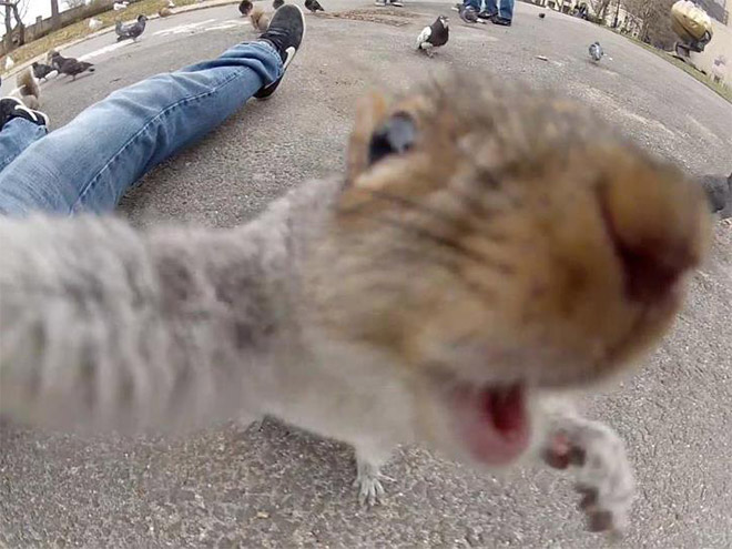 animal-selfies15